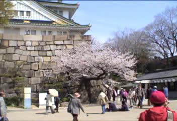 大阪城の桜見物…、④