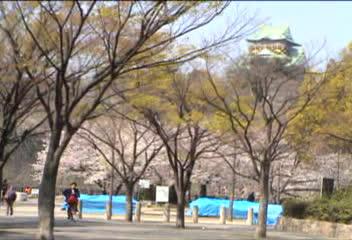 大阪城の桜見物…①