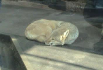 天王寺動物園⑧